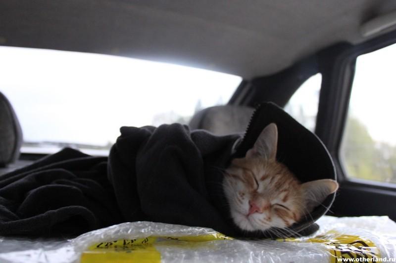 Кот замёрз